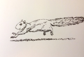 squirrel in a hurry