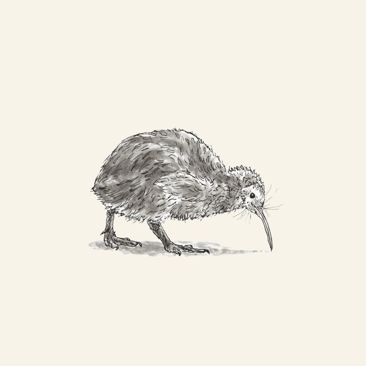 Kiwi Bird The Pawses