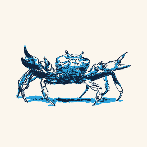 Blue crab with arms outstretched
