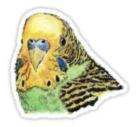 Green parakeet design decorating a Redbubble sticker
