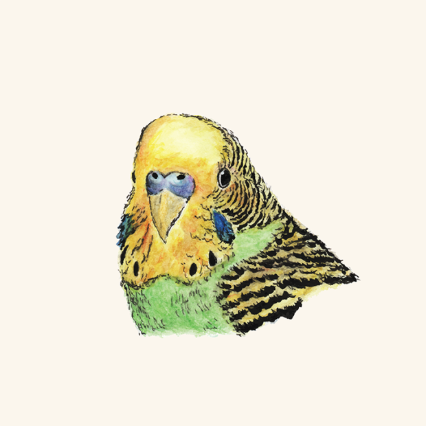 Pen and watercolor drawing of a green parakeet