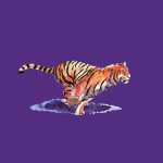 The Tiger on society6