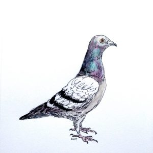 Daily drawing of a pigeon