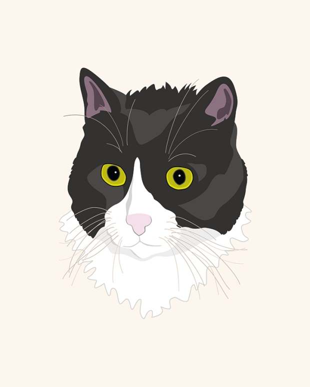Casual cat illustration - tuxedo cat