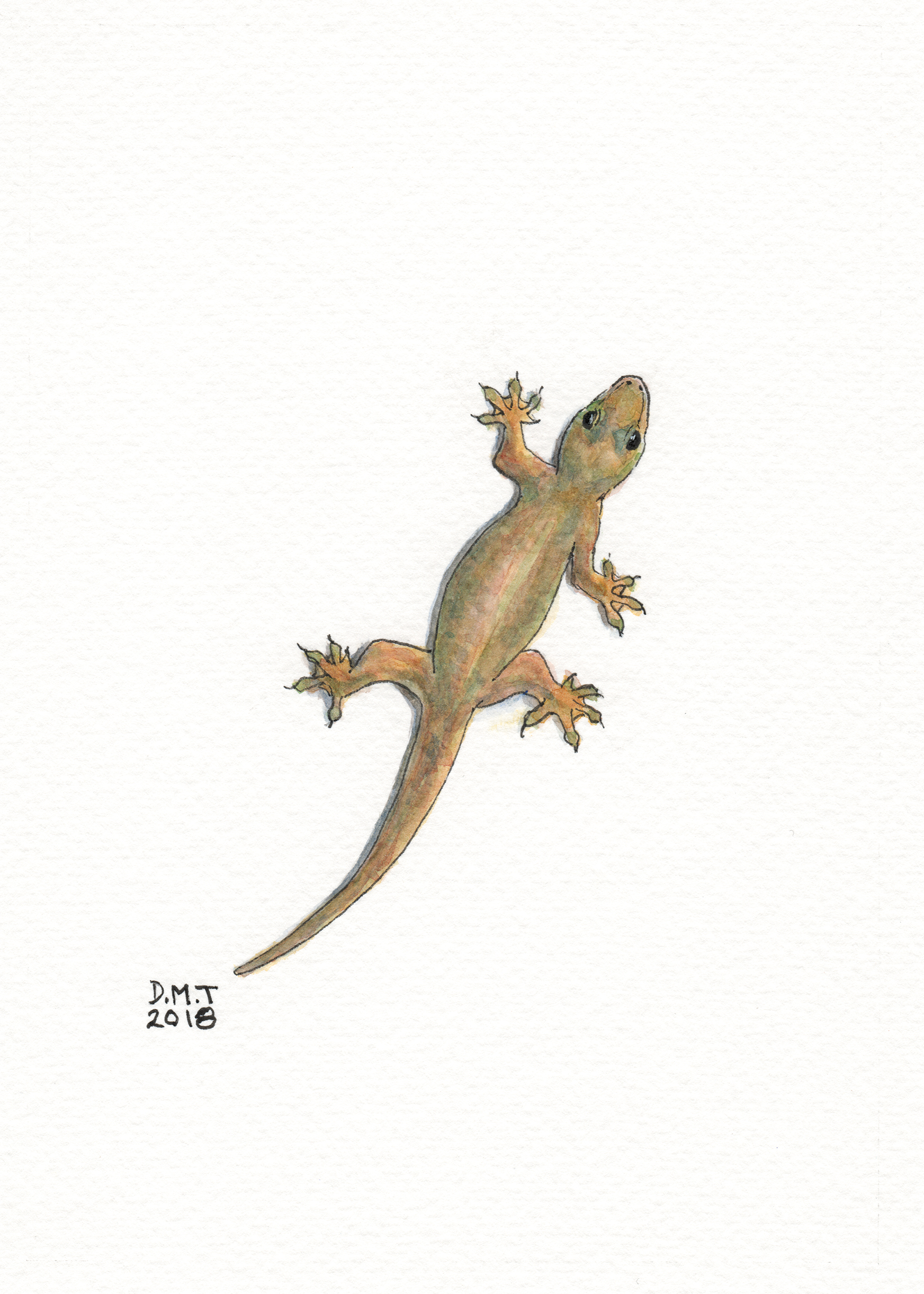 pen and watercolor drawing of a common house gecko