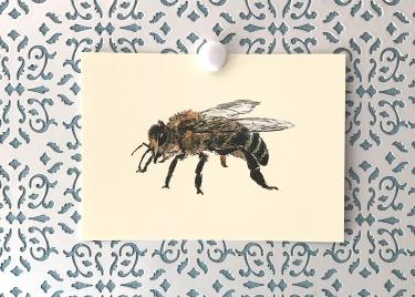 Honey Bee 5x7 art print