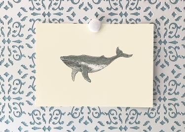 Humpback whale 5x7 art print