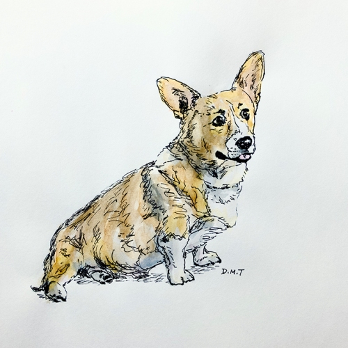 Corgi - pen and watercolor drawing