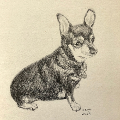 Mouse the Chihuahua - pencil drawing