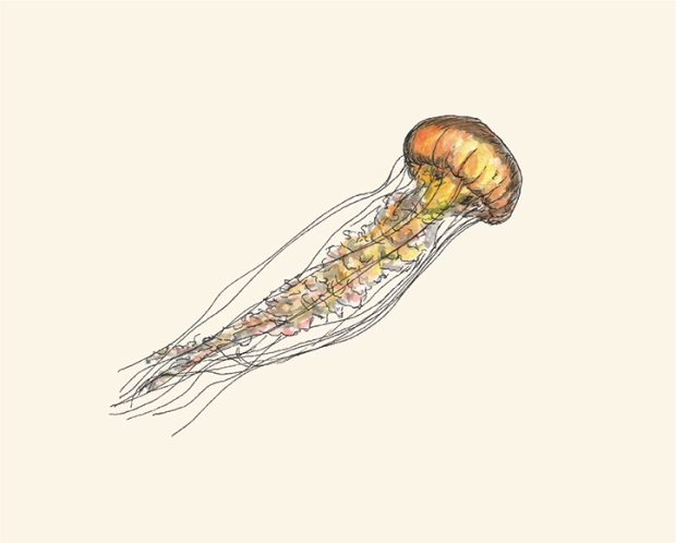 Pen and watercolor of a swimming jellyfish