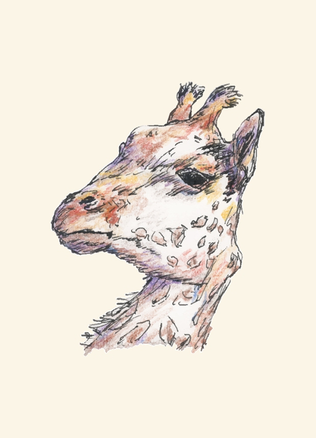Pen and colored pencil giraffe drawing