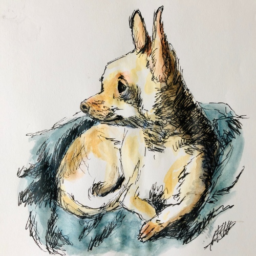 Pen and Watercolor Chihuahua
