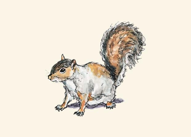 Ready, Set, Squirrel!